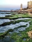 The shores of Lebanon